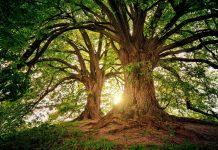 Zwei Bäume, dazwischen scheint die Sonne durch